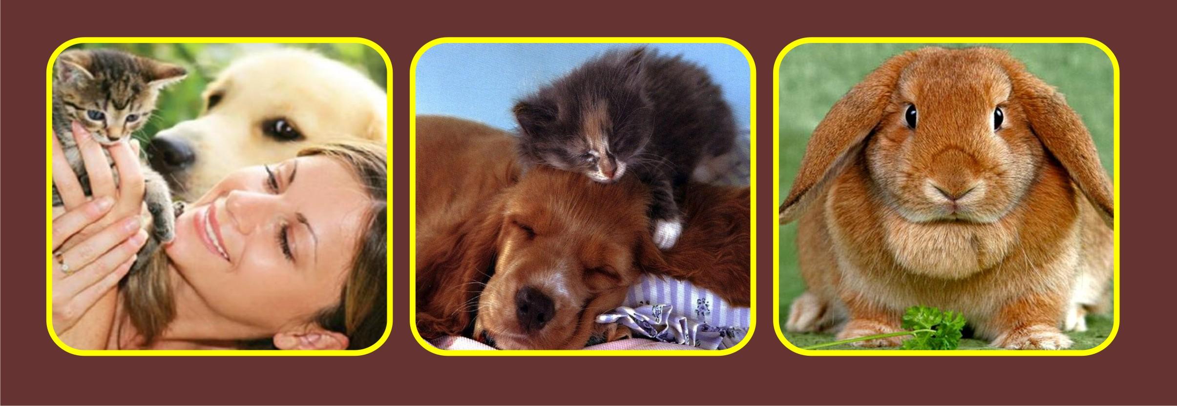 3 картинки животные на коричневом